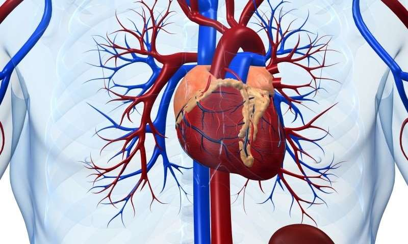 Miocardita – Cauze, simptome si tratament